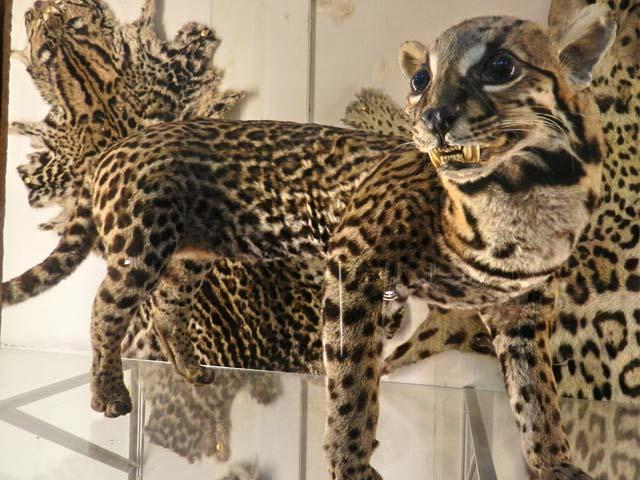 Museo de História Natural