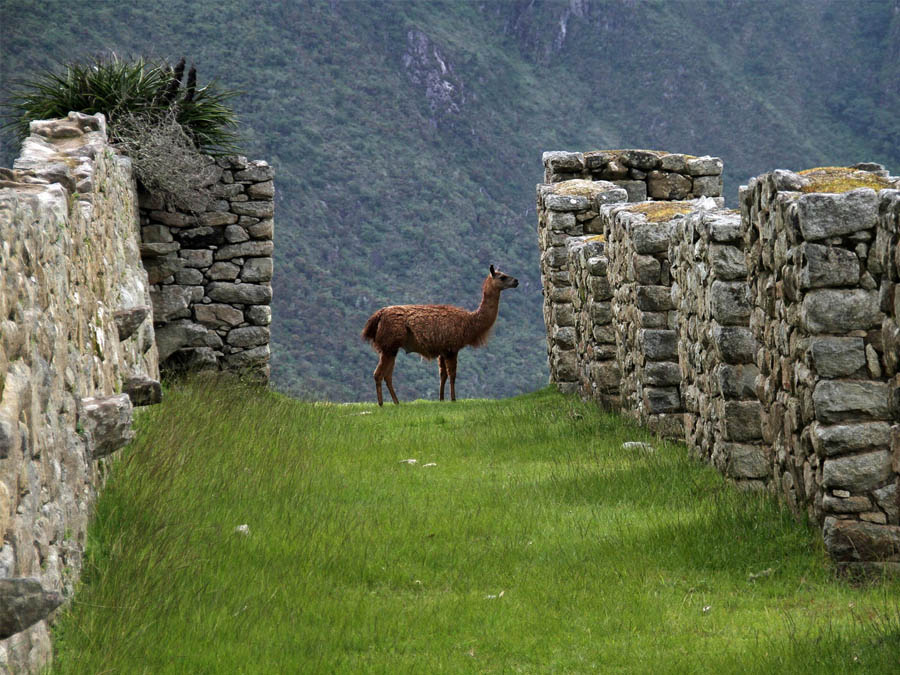 Nature and history in Machu Picchu