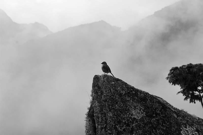 BirdwatchingMachu Picchu