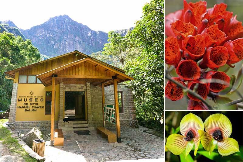 Machu Picchu Botanical Museum and Site