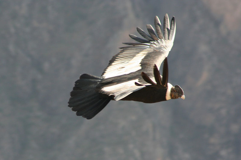 templo condor machu picchu