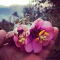 Testimonio 106 Boleto Machu Picchu