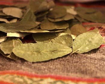 La sagrada Hoja de Coca de los Incas