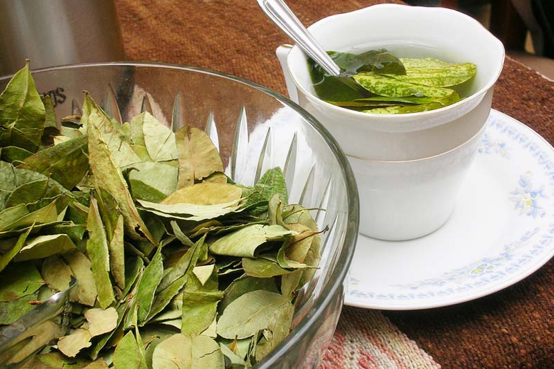 Coca tea in Cusco