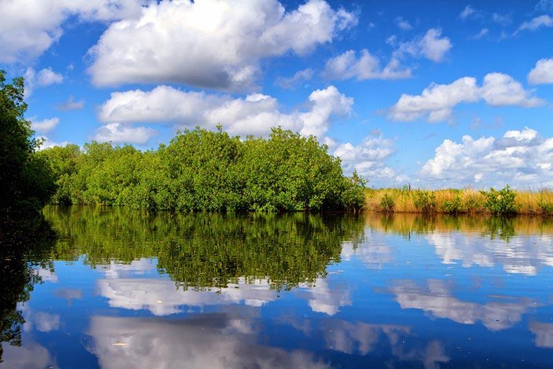 Vista de los Everglades de Florida