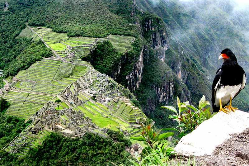 Ave en la cima de la montaña Huayna Picchu