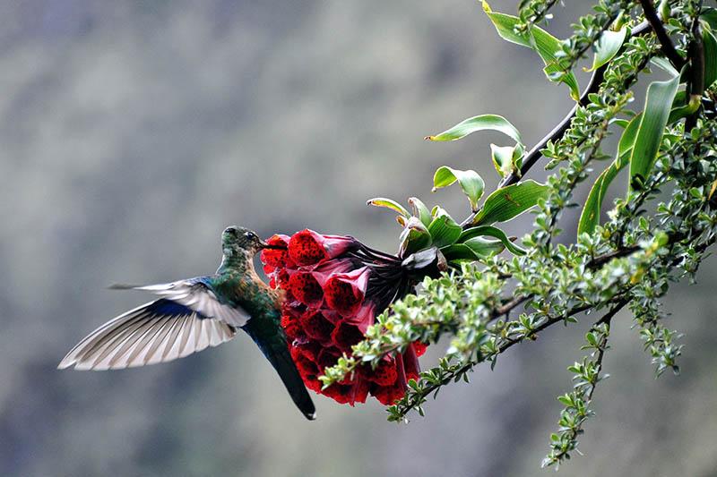 Orquidea en el Santuario de Machu Picchu