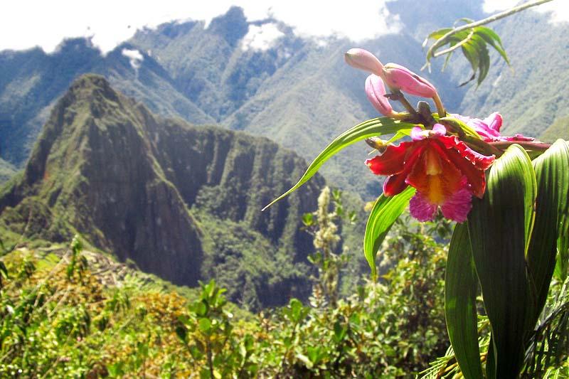 Orquídea en el camino hacia Machu Picchu